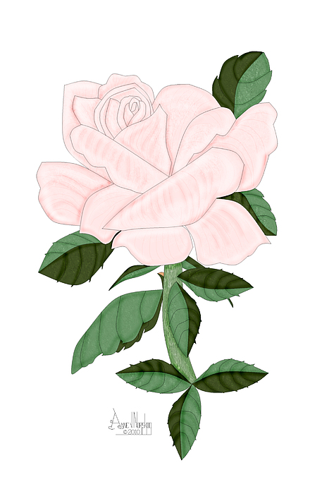 Pink Rose Painting - Winter Blush Rose by Anne Norskog