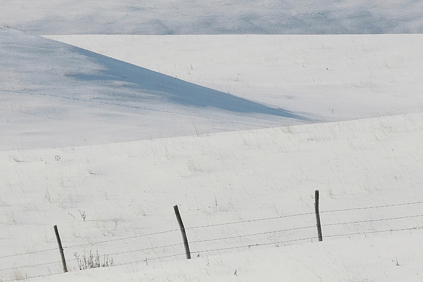 Barbed Wire Digital Art - Winter Day On The Prairies by Mark Duffy