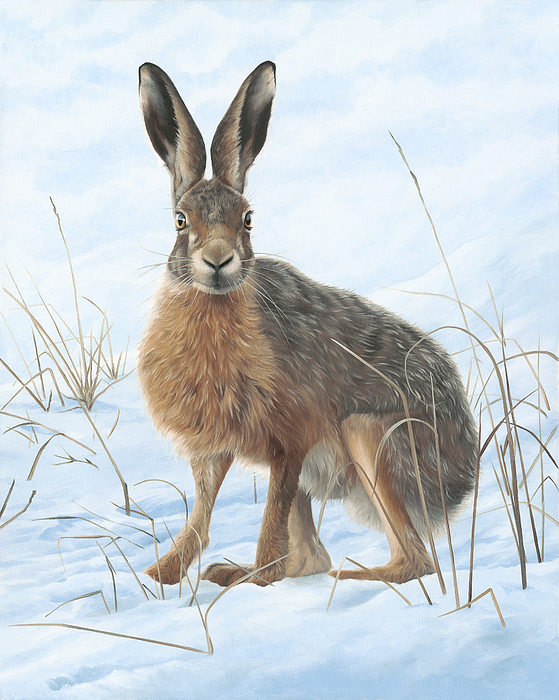 Winter Painting - Winter Hare by Clive Meredith