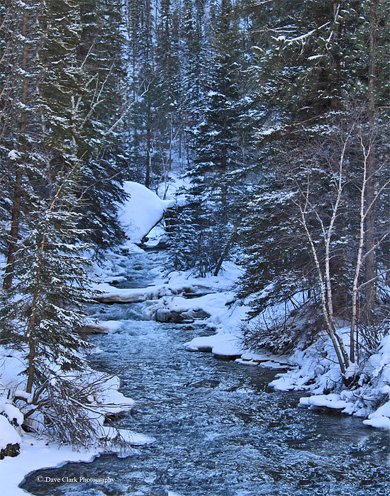 Snow Photograph - Winter In The Black Hills by Dave Clark