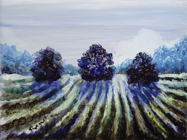 Winter Vineyards Painting - Winter In The Vineyard by Shelley Capovilla