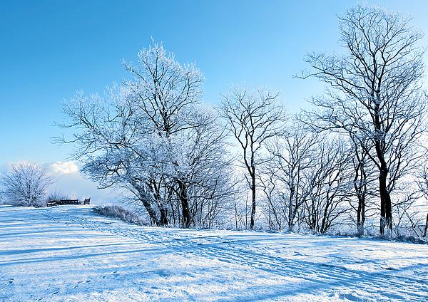 Blue Photograph - Winter Lights by Svetlana Sewell