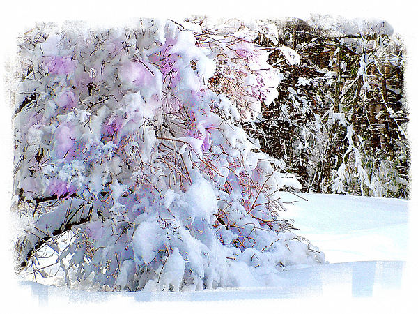 Winter Photograph - Winter Lilac by Rose Guay