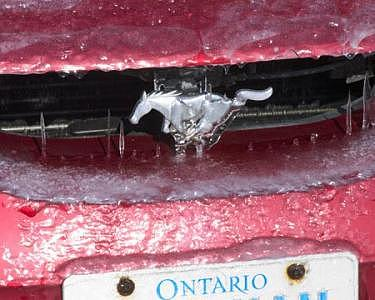 Red Photograph - Winter Mustang by Catherine Kelly