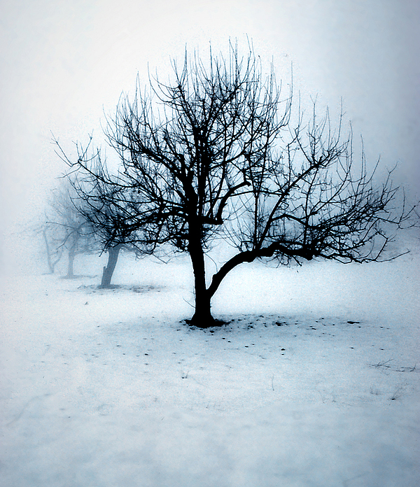 Winter Photograph - Winter Orchard by Dean Uhlinger