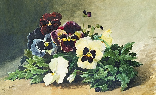 Winter Painting - Winter Pansies by Louis Bombled