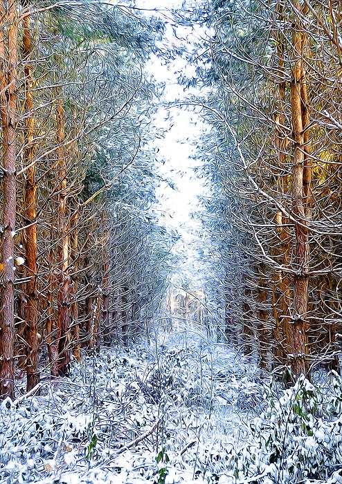 Artistic Photograph - Winter Path by Svetlana Sewell