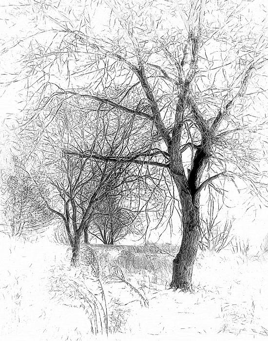 Winter Tree In Field Of Snow Sketch Digital Art by Randy ...
