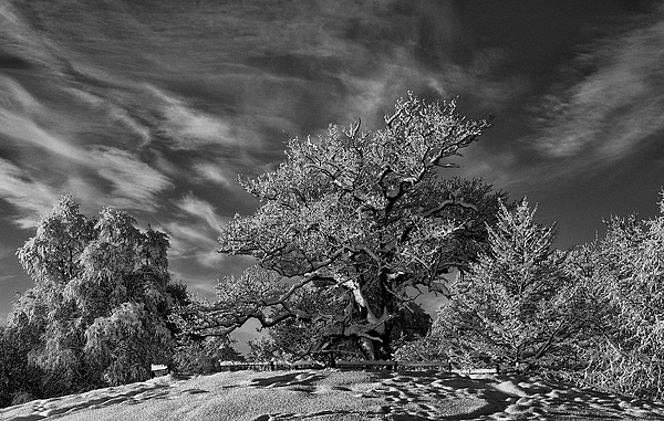 Trees Photograph - Winter Trees by Mark Denham