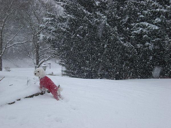Snow Photograph - Winter Wonderment by Heather Ashley