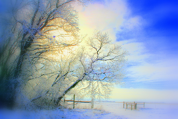Snowy Sunday Photograph - Winters Pretty Presents by Julie Lueders