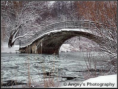 Elizabeth Park Trenton Photograph - Winters Wonders 2005 by Angeys Photography