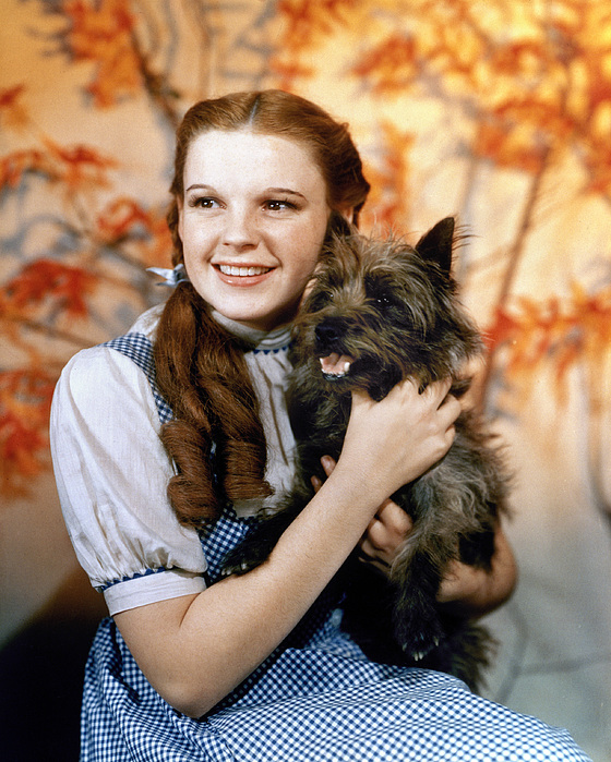 1939 Photograph - Wizard Of Oz, 1939 by Granger