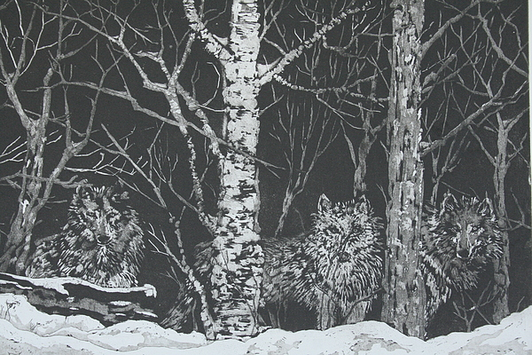 Wildlife Drawing - Wolves Among The Birch by Pati Hays