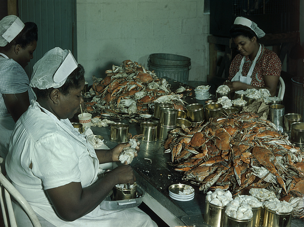 Indoors Photograph - Women Pick And Pack Crab Meat Into Cans by Robert Sisson