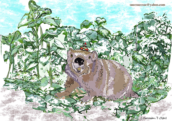 Ground Hog Image Drawing - Woodchuck Chuck by Susie Morrison