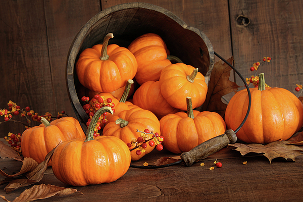 Autumn Photograph - Wooden Bucket Filled With Tiny Pumpkins by Sandra Cunningham