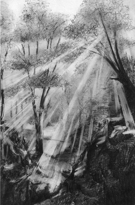 Pencil Drawing - Woodland Dawn by Andrew Boyce