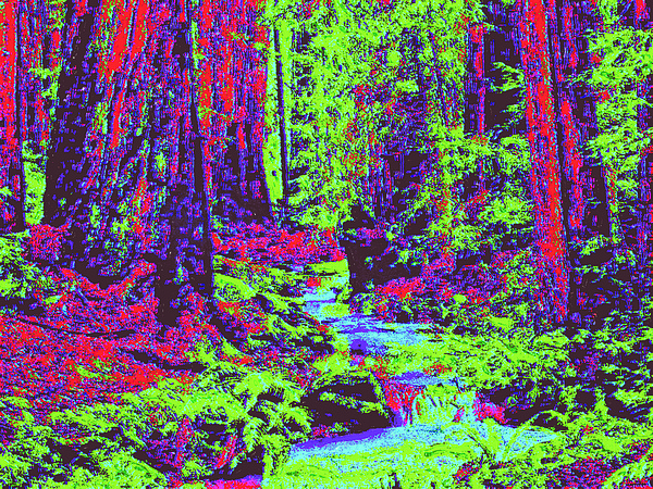 Woodland Forest D4 Digital Art by Modified Image