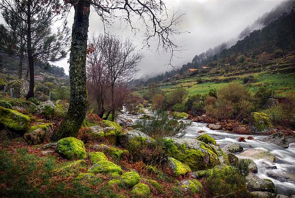 Autumn Photograph - Woods Landscape by Carlos Caetano