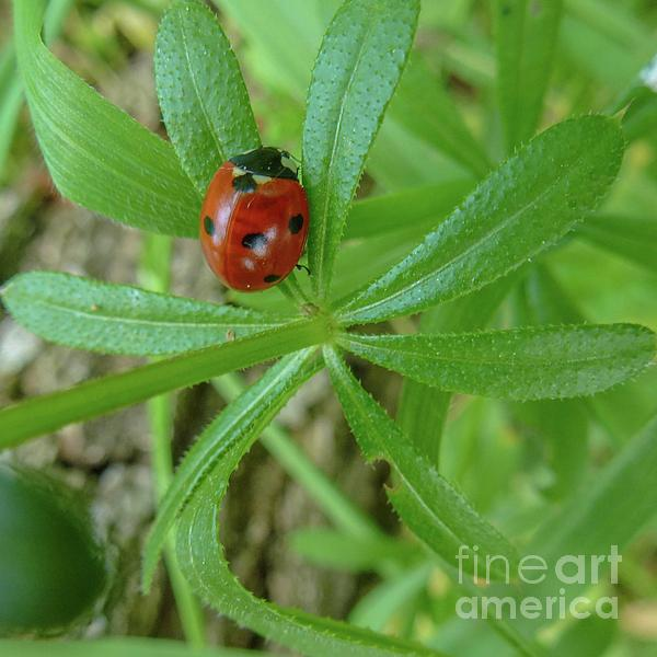 Beautiful Photograph - World Of Ladybug 3 by Jean Bernard Roussilhe