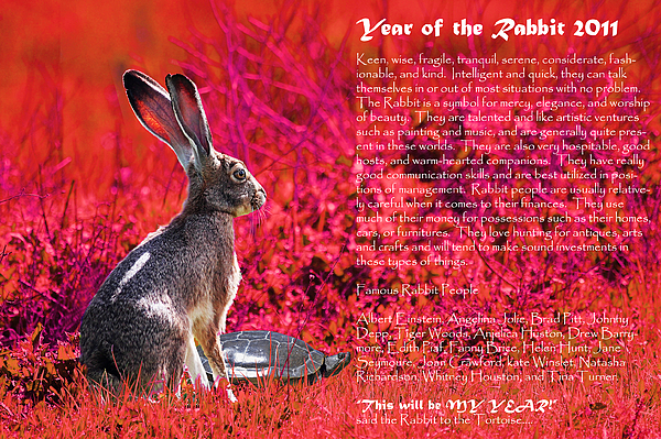 Year Of The Rabbit Photograph - Year Of The Rabbit 2011 . Red by Wingsdomain Art and Photography