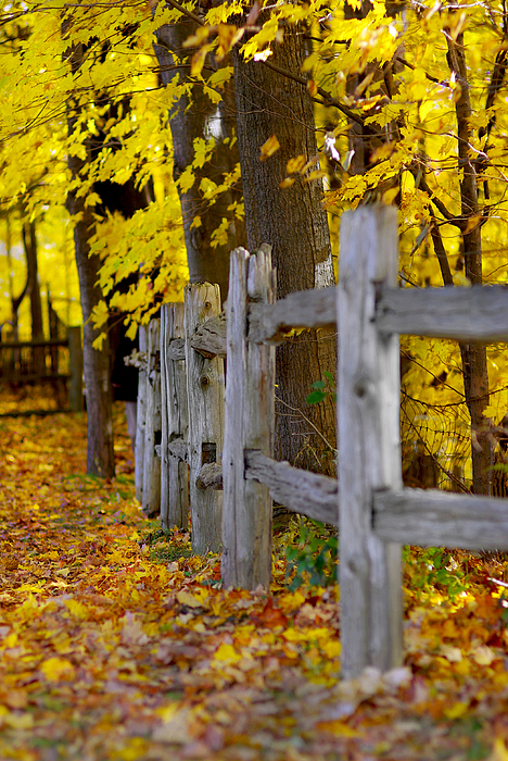 Autumn Photograph - Yellow Autumn-0085 by Sean Shaw