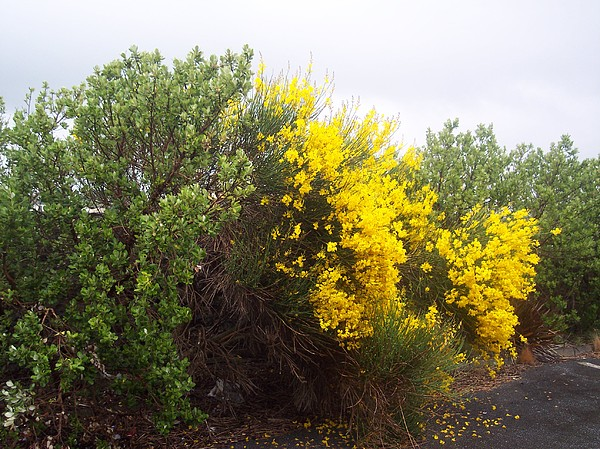 Flower bushes ireland photograph by lynda farrow yellow flower bushes ireland photograph by lynda farrow mightylinksfo Images