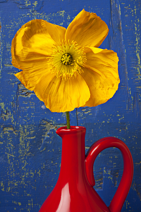 Yellow Photograph - Yellow Iceland Poppy Red Pitcher by Garry Gay