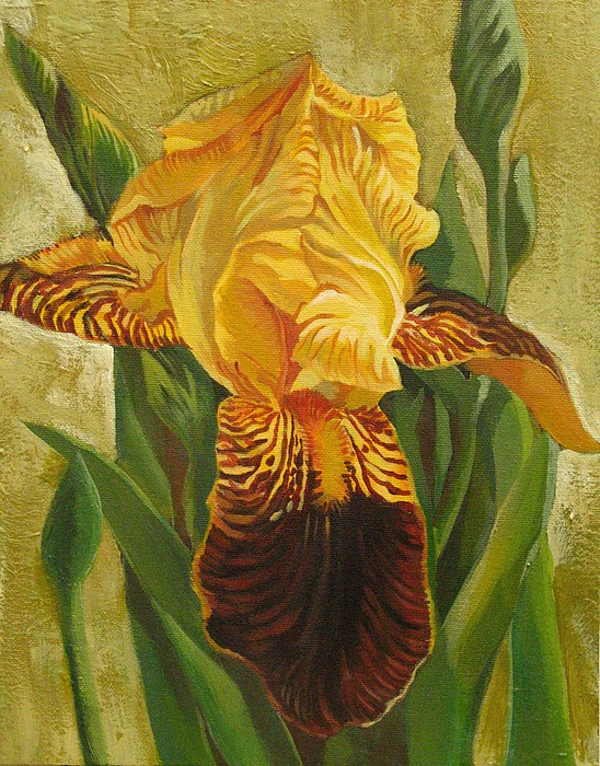 Iris Painting - Yellow Iris by Alfred Ng