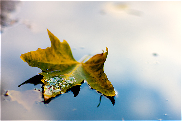 Leaf Photograph - Yellow Plus Blue Equals Edge by Janell Anderson