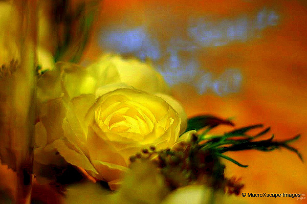 Dreamscape Photograph - Yellow Rose by JCYoung MacroXscape