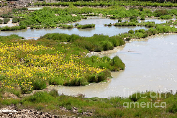 Yellow Photograph - Yellow Wildflowers At Mud Volcano Area In Yellowstone National Park by Louise Heusinkveld