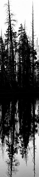 Seattle Photograph - Yellowstone Panel 3 by Rachel Barner