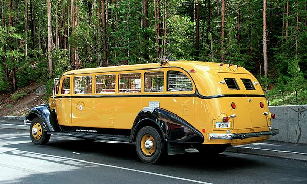 Yellowstone Park Tour Bus Photograph By George Jones
