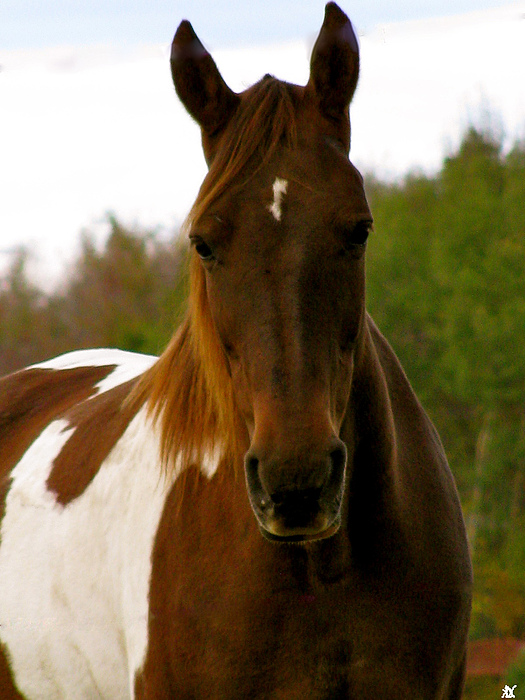 Paint Horse Photograph - You Called Me by Debra     Vatalaro