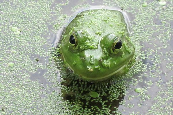 Diane Stresing - You Look Good in Green
