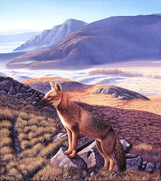 Fox Painting - Zorro Gris by Sergio Gaspar