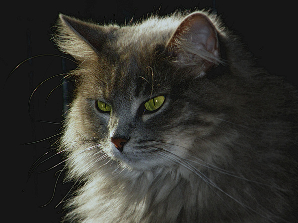 Cat Photograph - Zusje by Martin Morehead