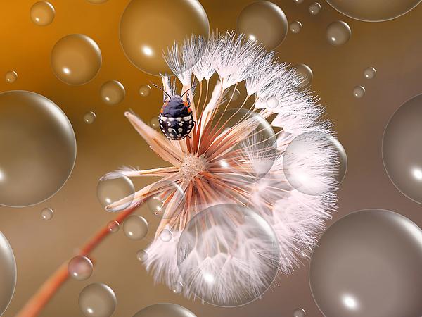 Parachute Descent... Photograph by Thierry Dufour