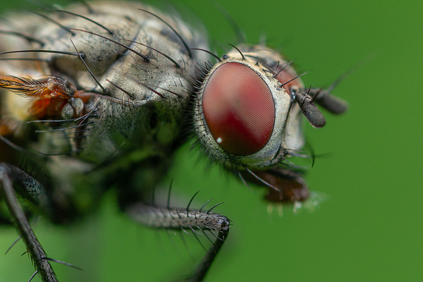 A Fly On Green Photograph by Andrey Kotov