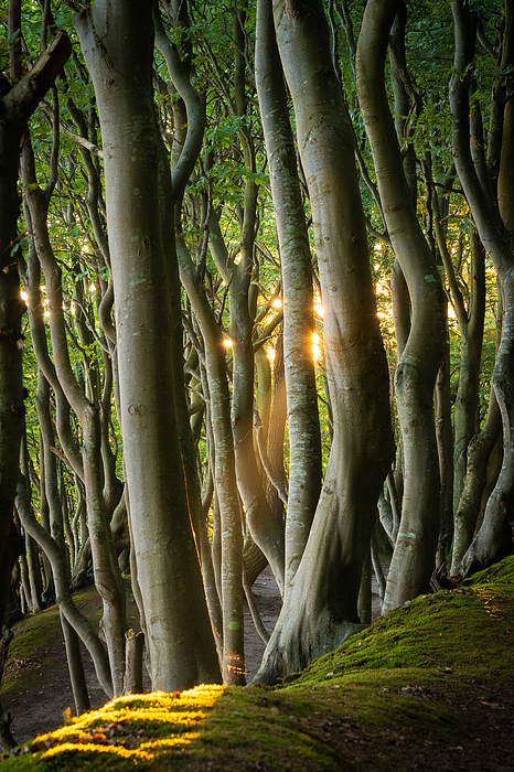 Alignment Photograph by Martin Wasilewski