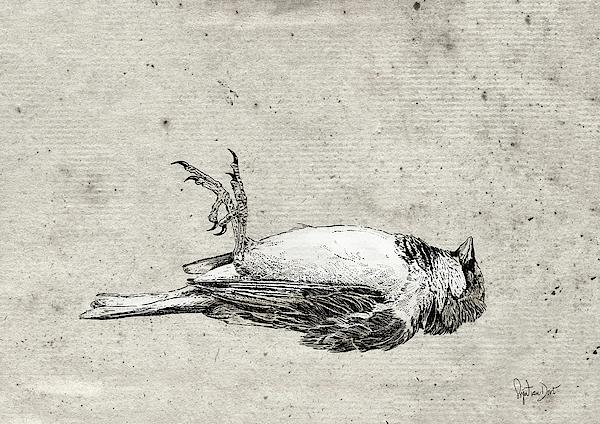Bird Digital Art - Dead Young Sparrow by Sigrid Van Dort