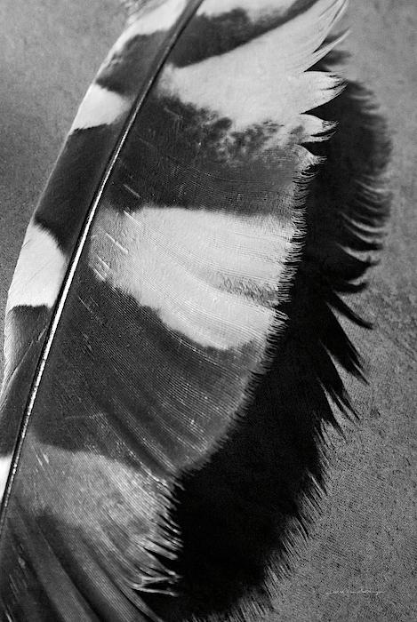 Birds Painting - Feather Shadow I by Debra Van Swearingen