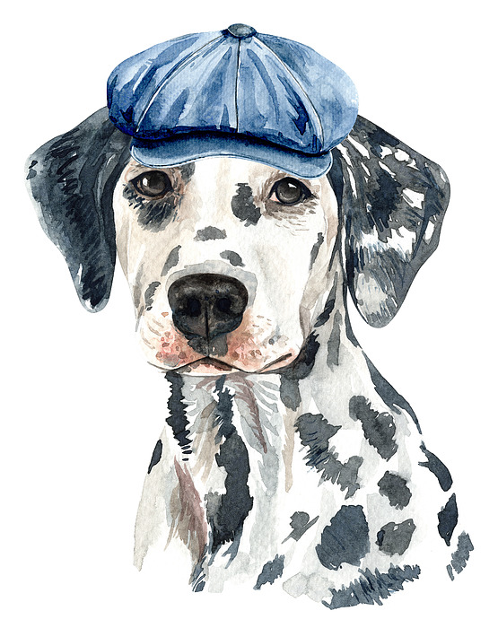 Dalmatian Painting - Lovely Dalmatian With Beret Watercolor by Cool Vintage Art