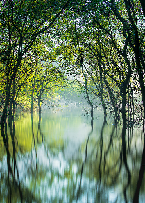 Miraculous Forest Photograph by Hidenori Sono
