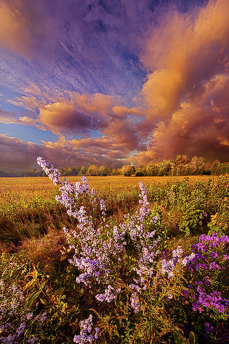Life Photograph - Not Every Journey Has An End by Phil Koch