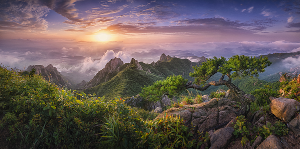 Pine Tree On The Rock Photograph by Tiger Seo