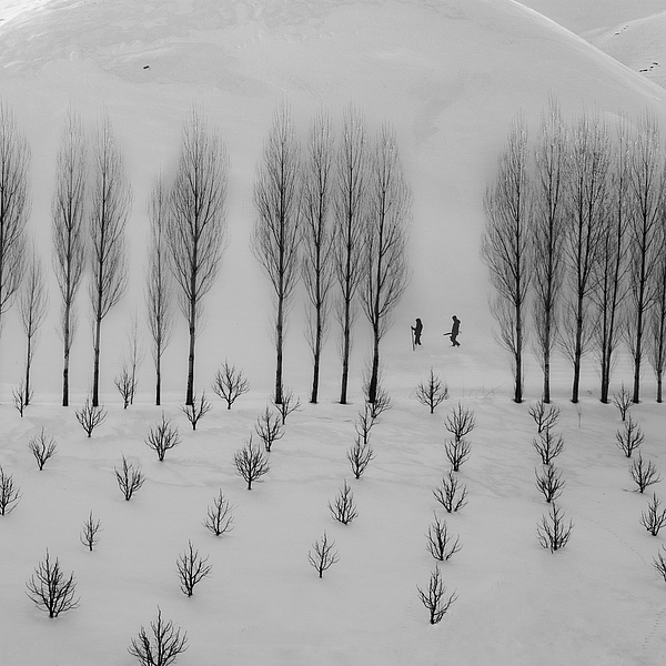Winter Photograph by Mohammad Alipour