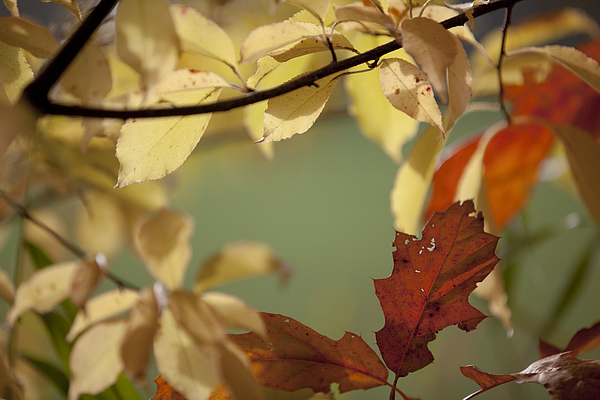 Close-Up Of Autumn Leaves On Tree Photograph by Paulien Tabak / EyeEm